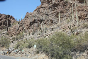 Foto Saguaros am Wegesrand