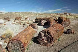 Foto: Versteinerte Bäume