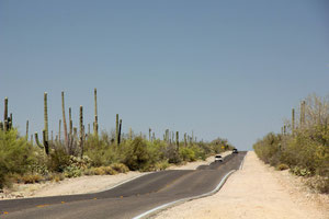 Foto: Saguaro National Park