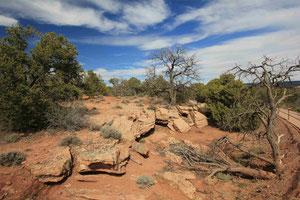 Foto: Im Canyon des Chelly