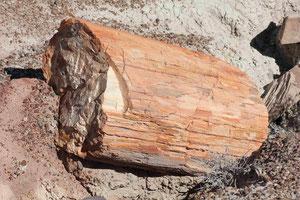 Foto: Versteinerter Baum
