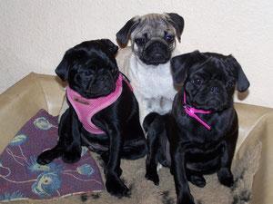 Die drei Schwestern Amelie, Penny und Lissy