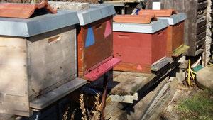 Bienenflug am Stand