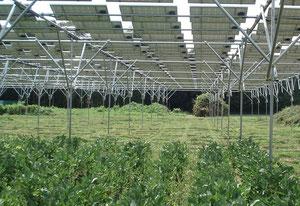 ソーラーシェアリングの実例(茨城県つくば市)