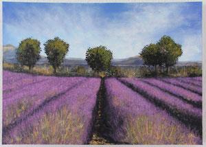 Lavendelfeld, 50 x 70 cm