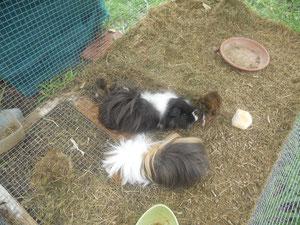 Lola y sus crias