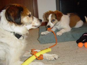 Spielen mit Derlin