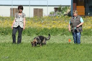 Die Hundeschule Matte bietet Hundefrisbee-Seminare an. Eva Zwicker und Alen Soldic unterrichten jeden Teilnehmer einzeln und gehen auf die Bedürfnisse ein.