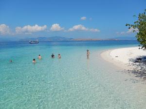 Gruppo gecoverde in acqua a Kemplong island