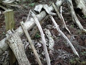 数年でホダ木は朽ちる