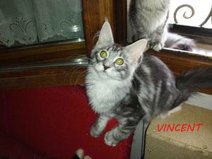 Firelynx Vincent