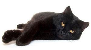 Katze schwarz, Foto: fotolia.com
