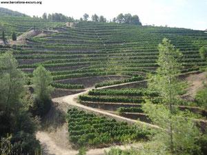 винные туры из барселоны, туры в приорат, вино приорат
