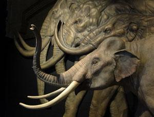 Mammut-Arten