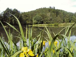 Fischteiche bei Rimbach