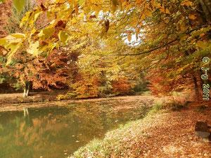 Waldsee im Herbst