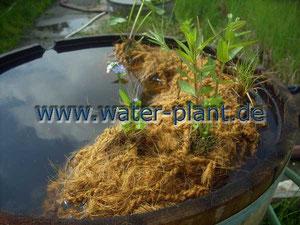 Kokos - Pflanzrolle mit Pflanzen