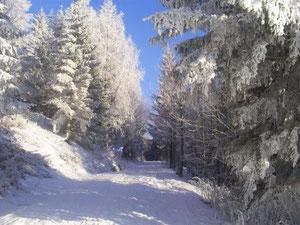 Wandern durch tief verschneite Wälder nahe unserem Haus