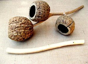 The Brazil Nut Agogo