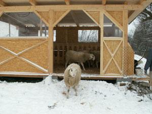Schafstall aus Holz