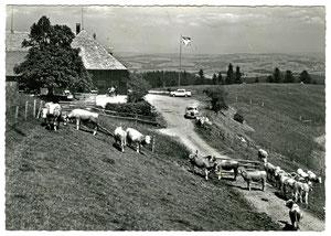 Luthern, Postkarte Ahorn-Alp ob Eriswil, Fam. Röthlisberger Tel 063 4 61 36, Foto H. Meier, Thun, ohne Stempel