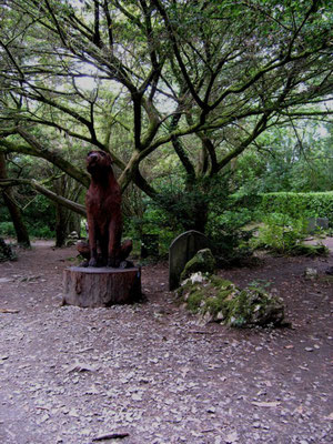 The cemetery wolfhound carved in March 2007 from a Giant Redwood that stood behind the Townhall.