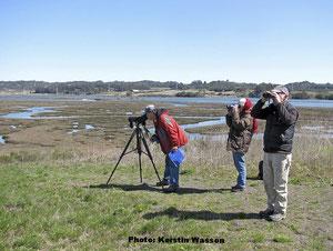 図2丘の上から市民科学者が湿地帯生態系のラッコを観察している。著者のR.イービー(右)、著者のR.スコールズ(左)、同じくボランティアのR.チャフィン(中央)(Photo: Kerstin Wasson).