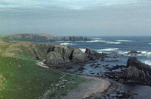アムチトカ島ハーレクインビーチ photo by USFW - Wikipedia