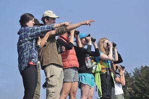 5月、クエスト大学の学生らがカイウクォット湾沿岸に住むオオカミを研究している。  Photo: Submitted