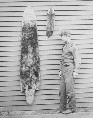 膃肭臍保護条約が締結するまでに、ラッコの個体数は2,000頭までに激減してしまった。