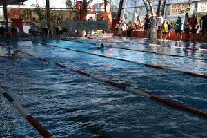 Aktive beim Delfinschwimmen