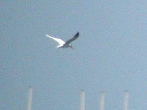 ・2014年6月1日 葛西臨海公園東渚