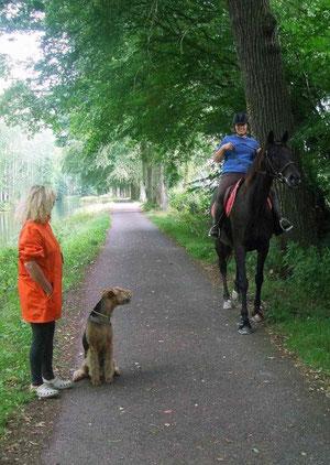 """Pferde - kein Problem, bei """" Sitz"""" bleibe ich sitzen"""