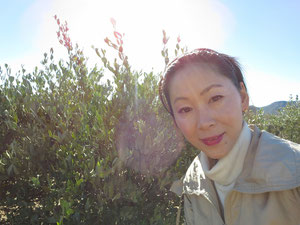 ❦◠‿◠笑う門には福来たる♥Laugh and be jojoba fat.(笑えばホホバが肥える)!は、私のゴールデンモットーです。弊社ホホバ栽培管理担当 ㈱りびえ代表の渡邊さゆりです。今後共宜しく御願い申し上げます。2014年1月アリゾナ州ハクアハラにて撮影