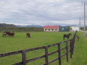 急に走りよって馬を怖がらせていた