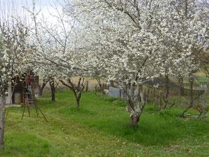 Gîte à Caussade coté jardin