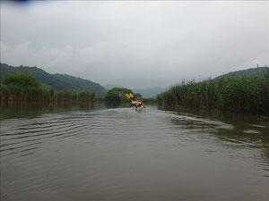 西ノ湖の葦の中を漕ぐ