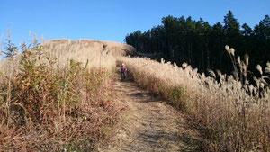岩湧山の萱の原