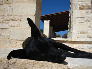 Fibi - chien pour traitement médicinal/ VetMed Universite de Vienne