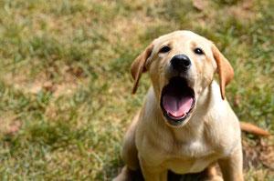 NJ Dog Training