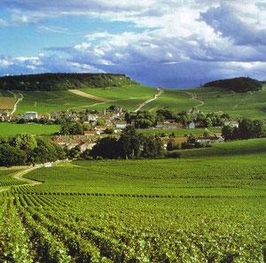 Wein aus dem Burgund