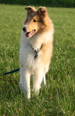 "Margrave Hills Hell Raiser ""Sammy"""