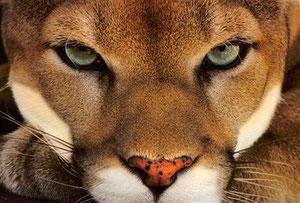 Sarà Puma?