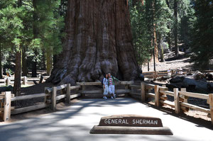 Coast to Coast USA - Sequoia NP General Sherman