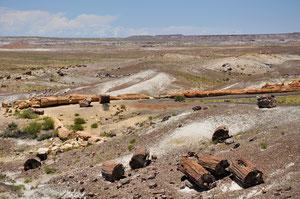 Foto del giorno: Tronchi pietrificati - Petrified Forest