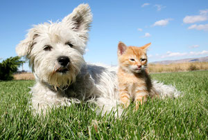 Installs Pet Stop® brand of Invisible Fence for both dogs and cats.