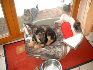 Da war die Katze noch fast größer als ich :-)