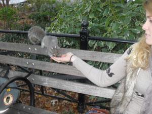 Dieses Eichhörnchen lebt zwar nicht an der Wallstreet, aber ganz in der Nähe am Union Square.