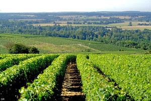 Vignobles de Pouilly Fumé