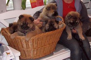 Ronja und ihre Geschwister beim Tierarzt